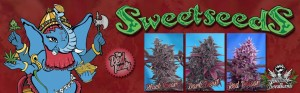 Sweet-Seeds-Red-Family-Collection-1
