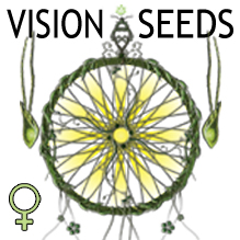 vision_seeds_