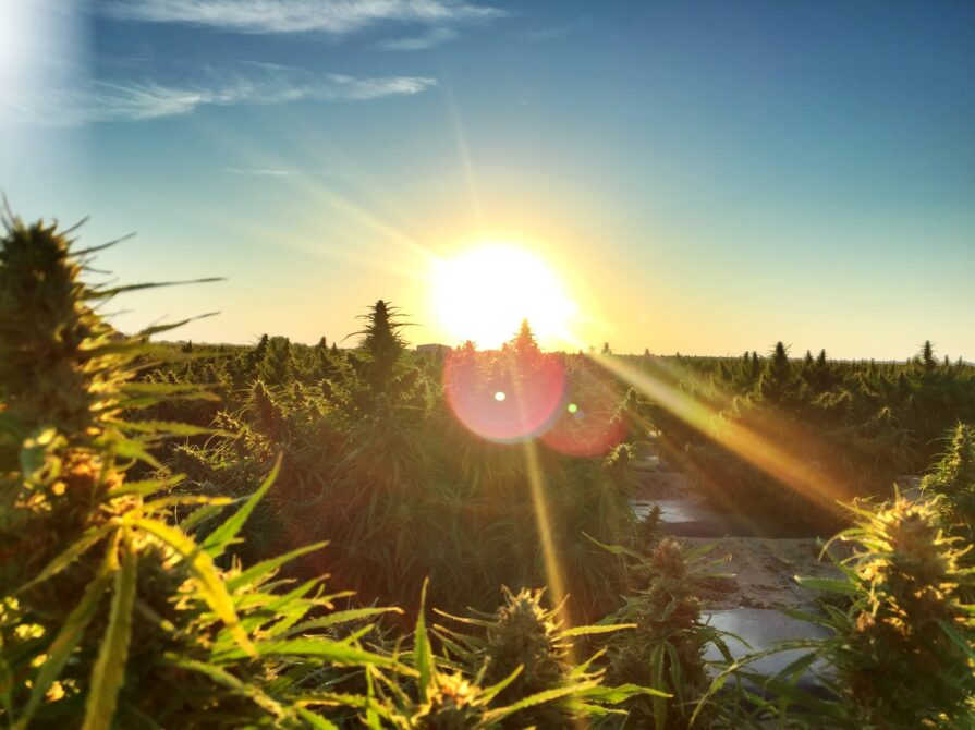sunrise-in-hemp-fields-hd_small