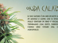 Onda Calabra, lo strain Made in Italy