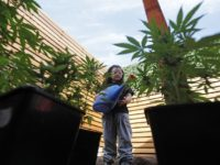 In this Nov. 16, 2014 photo, Javiera Canales, poses for a photograph next to marijuana plants grown in her home. Her mother grows the plants to extract oil to treat Javiera's seizures, though she could face up to 15 years in jail for doing so. (AP Photo/Luis Hidalgo).