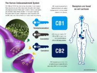 La cannabis e sistema endocannabinoide [video]