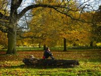 Photos taken in Hyde Park and Kensington Gardens in the Autumn of 2018.