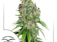 Strain Guide: Outlaw