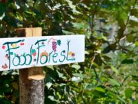 A Milano nasce la Food Forest, la foresta commestibile