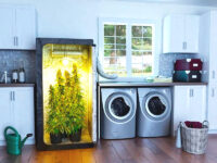 Coltivare in casa facilmente: I-Grow lancia la nuova linea Spectrum Grow Box ONE